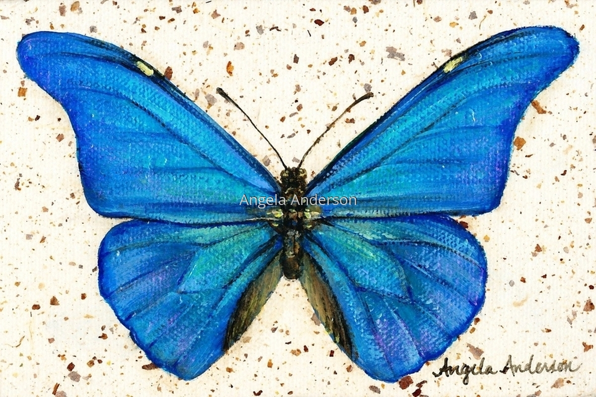 Mini Morpho (large view)