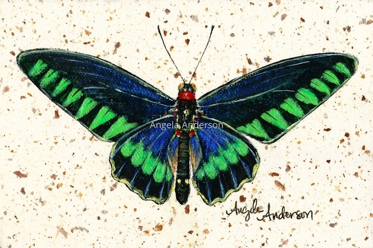Trojana Birdwing (large view)