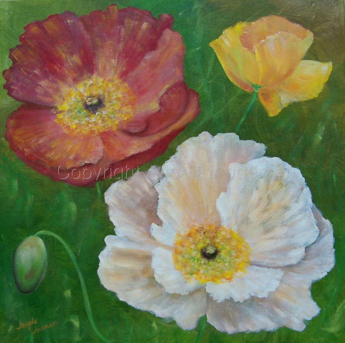 Garden Poppies (large view)