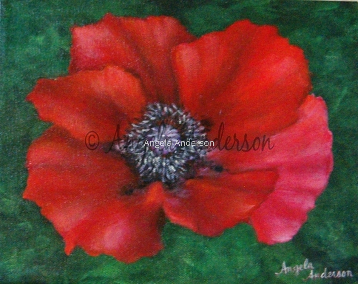 Red Oriental Poppy (large view)
