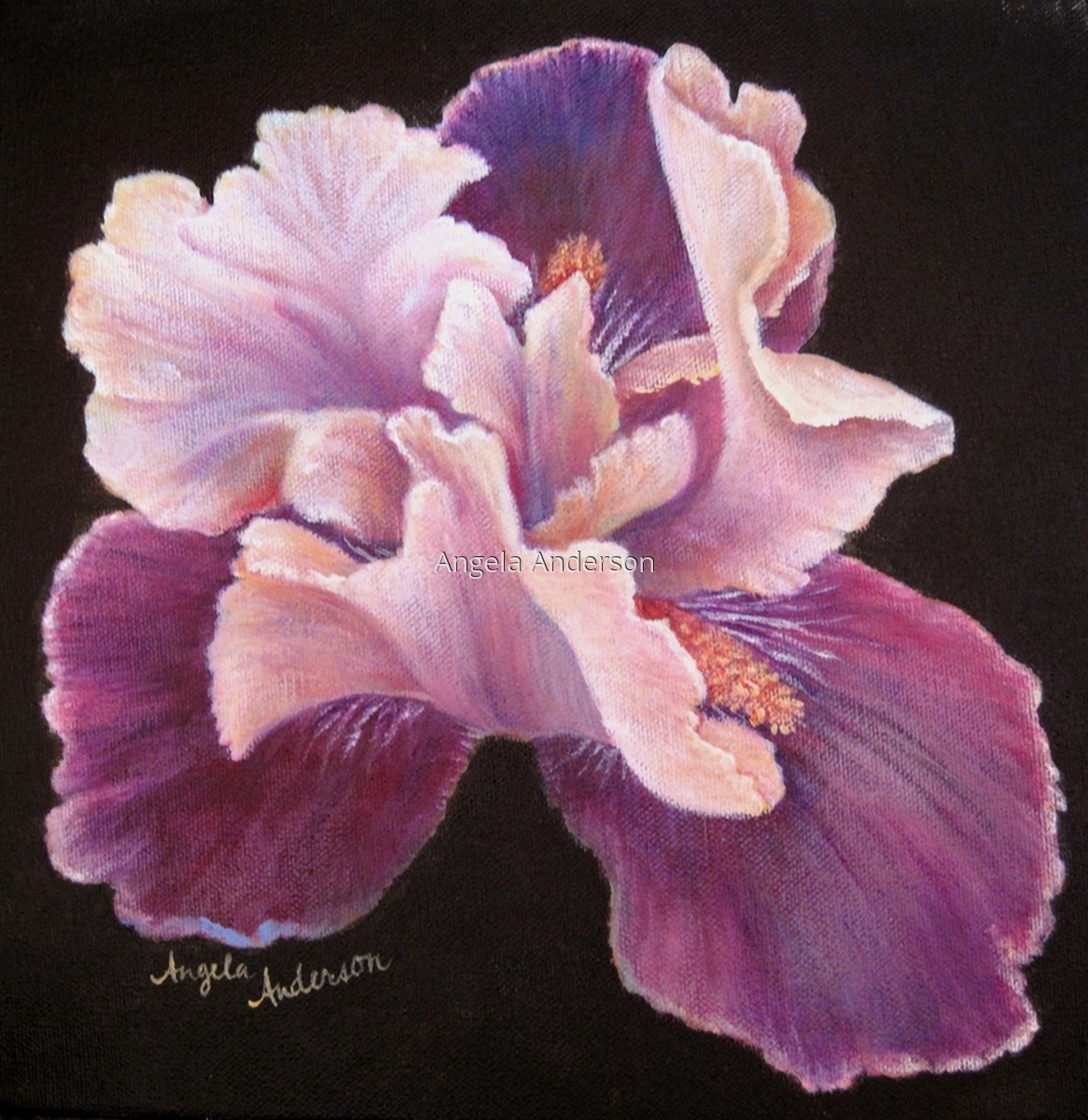 Purple Pink Iris (large view)