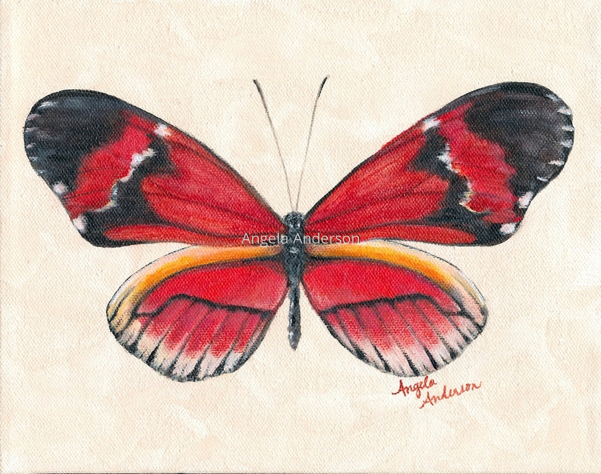 Red Butterfly (large view)