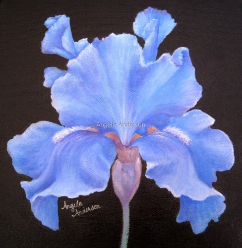 Blue Iris by Angela Anderson