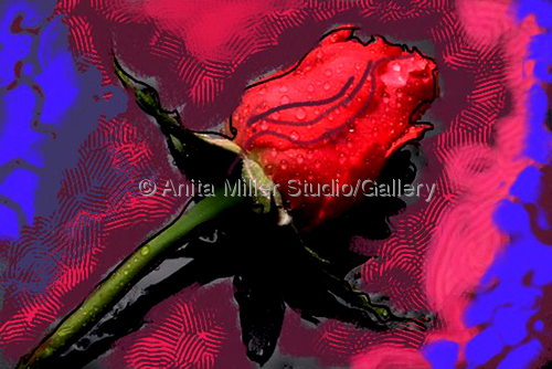 The Rose by Anita Miller Gallery