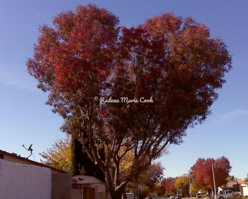 My Heart Tree -Fall