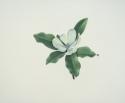 Sweet Magnolia Blossom (thumbnail)