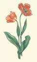 orange tulips print (thumbnail)