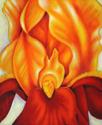 Gold Iris (thumbnail)