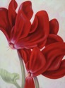 Red Cyclamen (thumbnail)