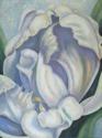 White Parrot Tulip (thumbnail)