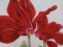 Red Cyclamen Duo (thumbnail)