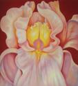 Iris 3 (thumbnail)