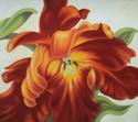 Red Parrot Tulip 4
