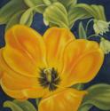 Daydream Tulip (thumbnail)