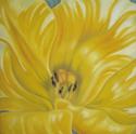 Sweetheart Tulip (thumbnail)