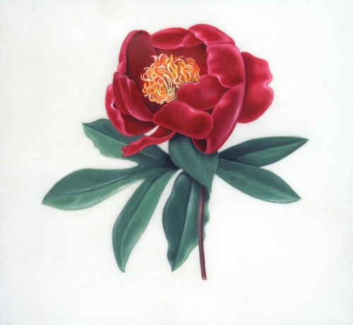 Red Peony on Vellum, 2