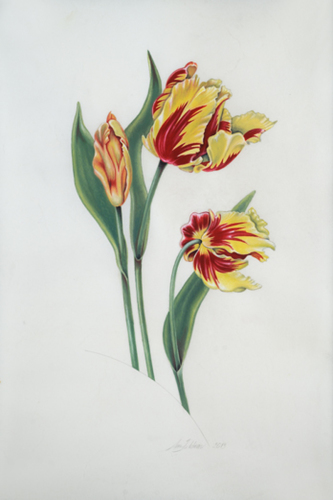 Tulip Trio on Vellum