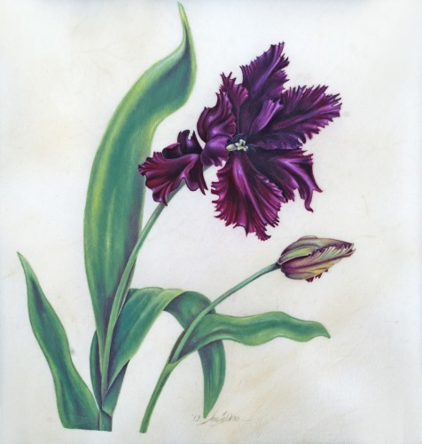 Black Parrot Tulip on Vellum