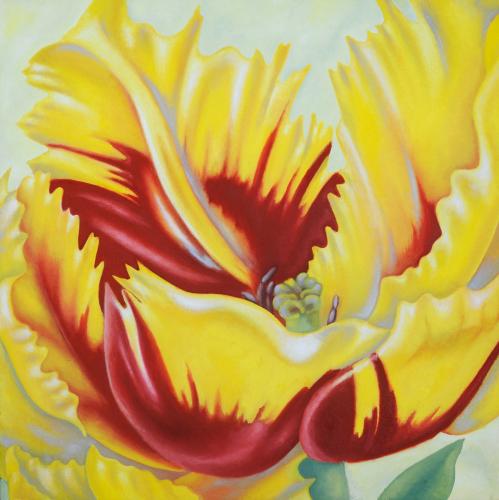 Large Parrot Tulip