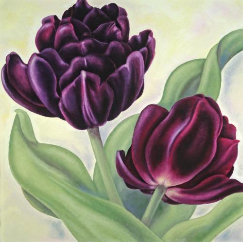 Purple Peony Tulip
