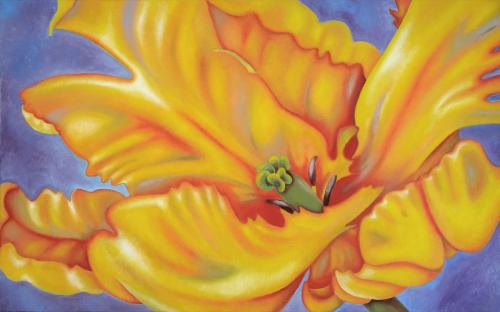 Caribbean Parrot Tulip