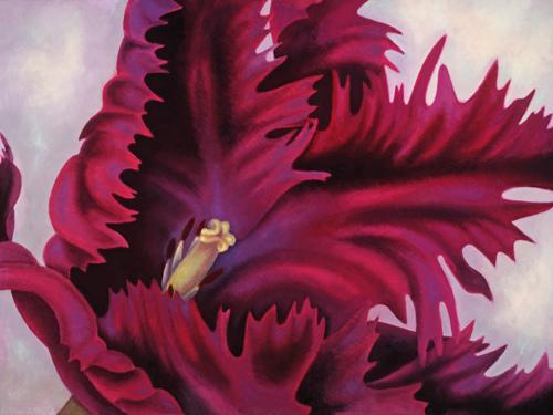 Black Parrot Tulip 2