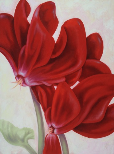 Red Cyclamen (large view)