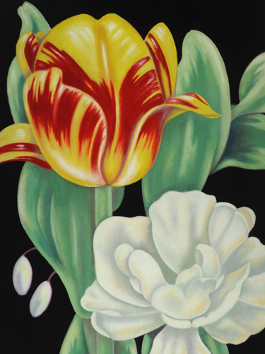Olympic Flame and Peony Tulip (large view)