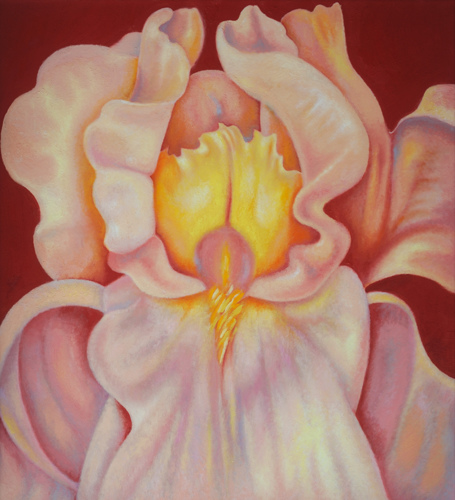 Iris 3 (large view)