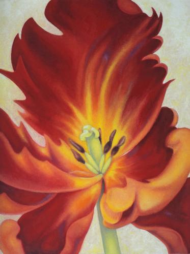 Red Parrot Tulip 3