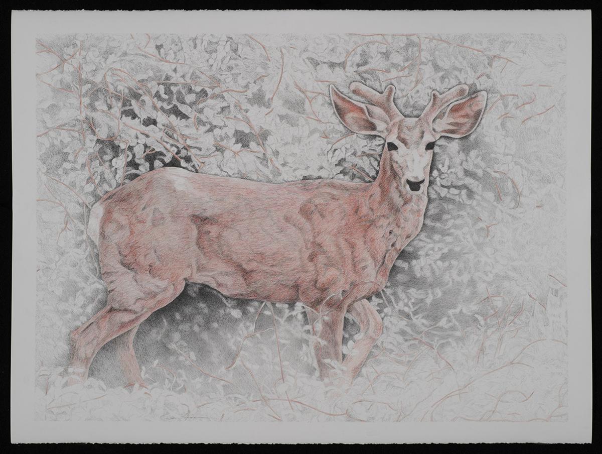 Deer (large view)