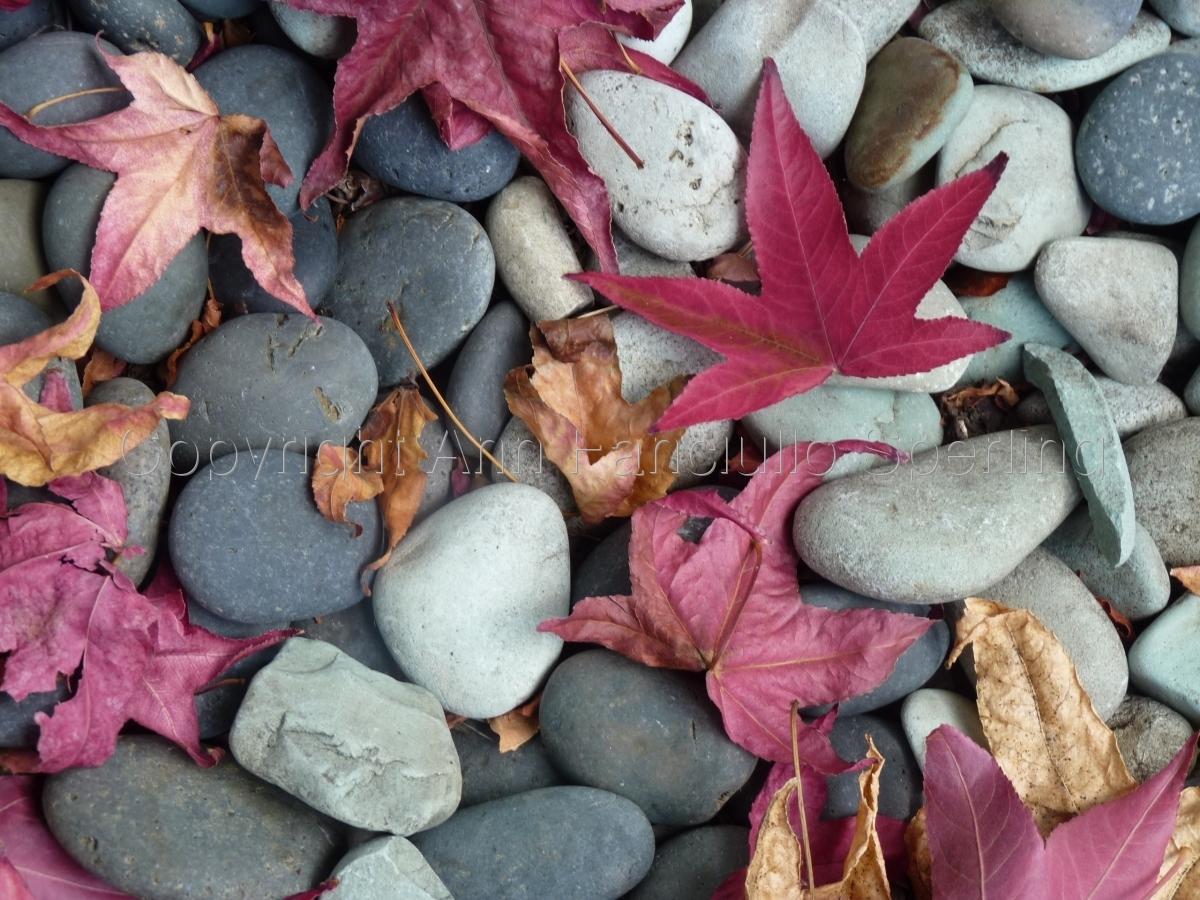 Rocks & Leaves (large view)