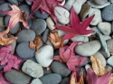 Photography--Color-NatureRocks & Leaves