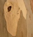 Bark 3 (thumbnail)