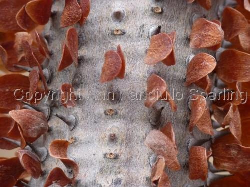 Rust Leaves by Ann Fanciullo Sperling