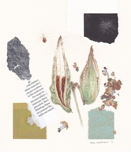 Watercolor of an open milkweed pod, with abstract collage and metallic leaf elements.