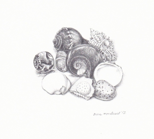 Drawing of shells and fossils on paper. (large view)