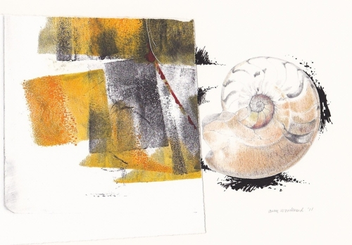 Drawing of a fossil ammonite shell with abstract monoprint fragment (large view)