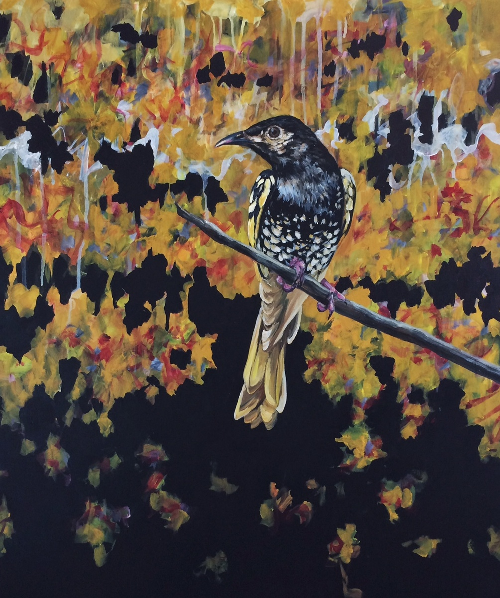 Regent Bower Bird (large view)