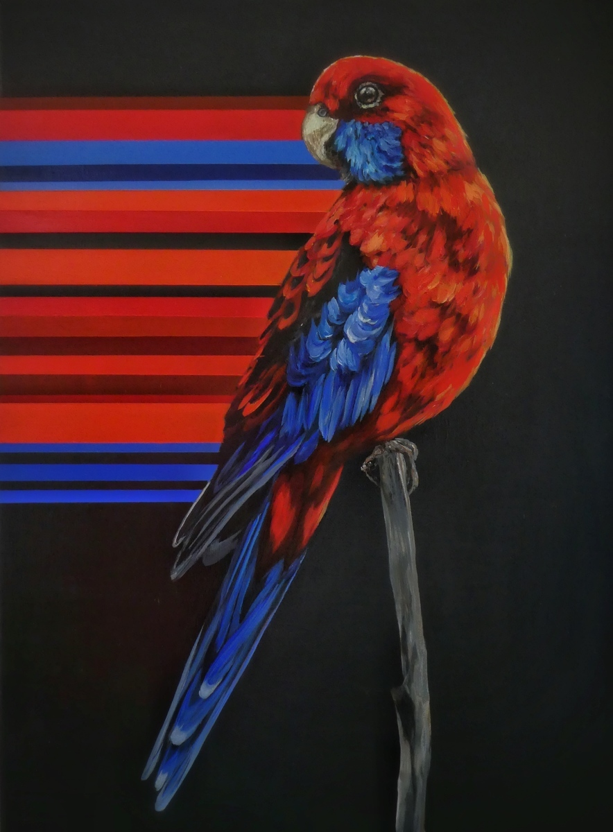 Crimson Rosella (large view)