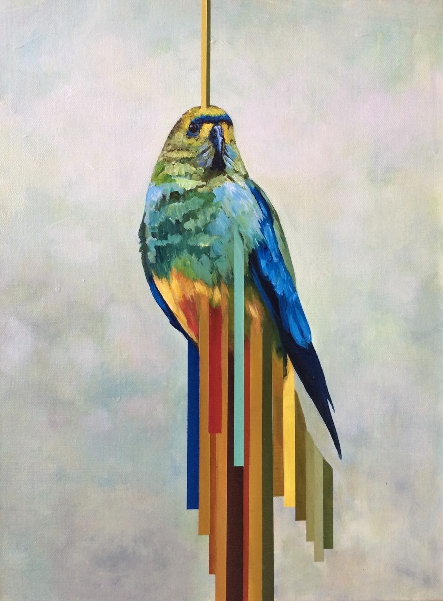 Ringneck Parrot (large view)