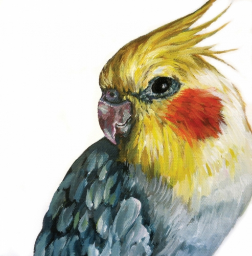 Cockatiel (large view)