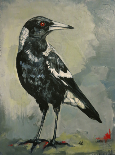 Magpie (large view)