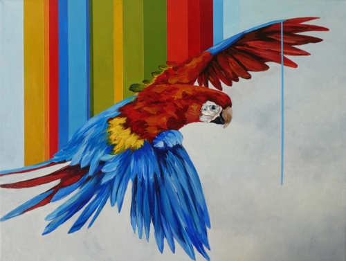 Macaw by art of april white