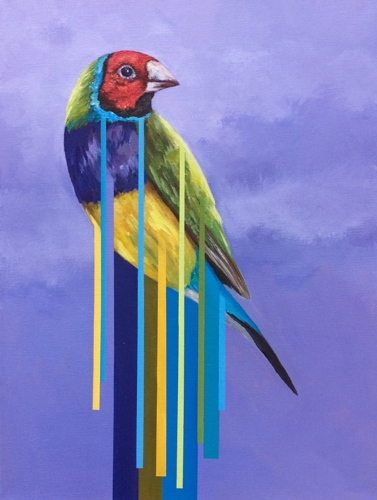 Gouldian Finch by art of april white