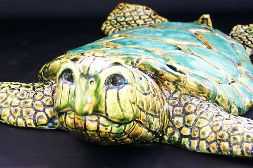 Closeup of turtle