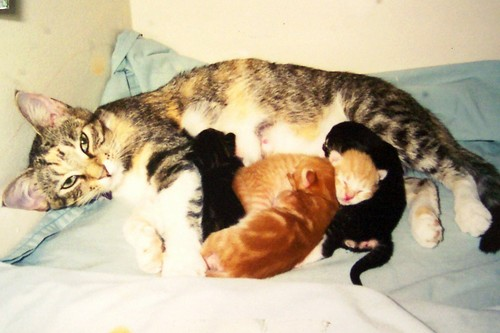 Kali is rescued and kittens are born.
