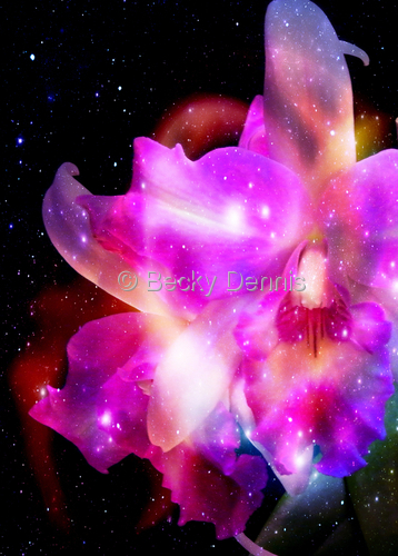 Cosmic Orchid 1