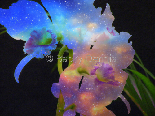 Cosmic Orchid 5