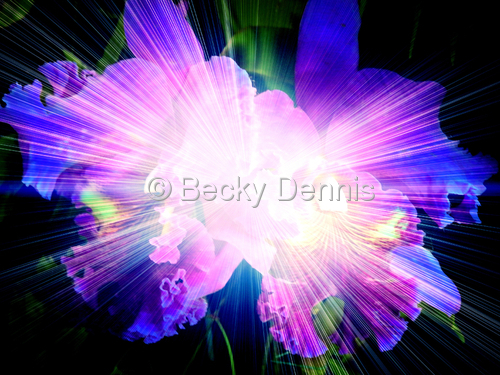 Cosmic Orchid 6
